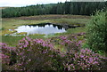 NR8058 : Lochan, East of Sheirdrim Hill, Kintyre by David G Campbell