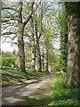 SO4565 : Road, Croft by Richard Webb