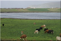 HU3909 : View towards Scatness from the Sumburgh Hotel by Mike Pennington