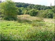 SE0722 : Flowery field, Greetland by Humphrey Bolton