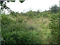 SK5345 : Abandoned allotment garden by Alan Murray-Rust