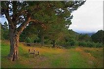 NH9506 : Seat, Rothiemurchus Lodge by Mick Garratt