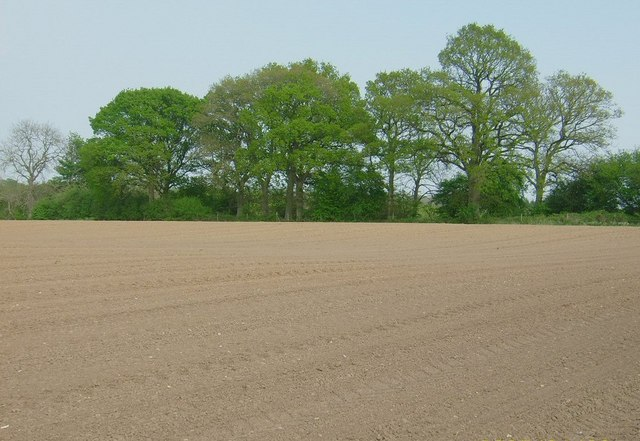 Ploughed Field near Ivy's Copse