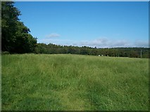 J3532 : View across pasture land towards the Tollymore Forest by Eric Jones