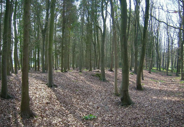 Sheer's Copse, B4437 near Ditchley