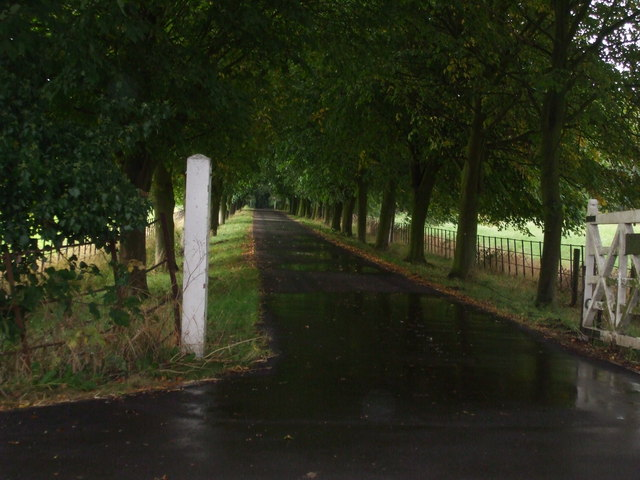 Avenue of trees to Boreas Hall by Glyn Drury