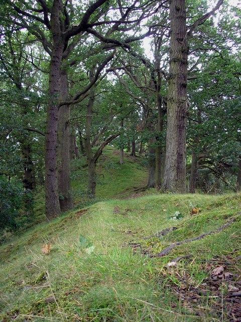 Woodland Ridge,Linglie