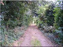 TR2656 : Footpath at Staple by PAUL FARMER