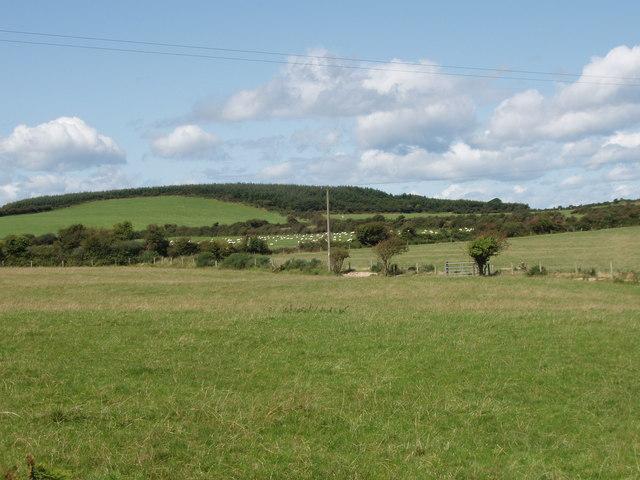 Pasture near Kilbride South
