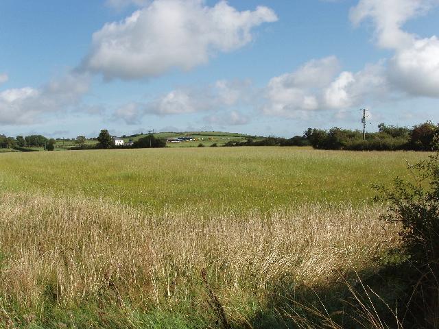 Uncut grass field near Monamintra