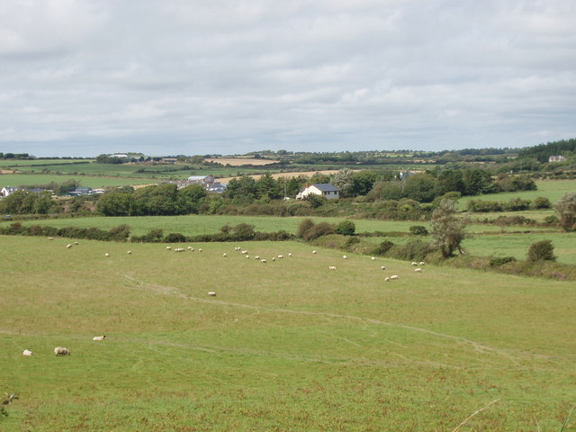 Sheep on pasture near Leperstown