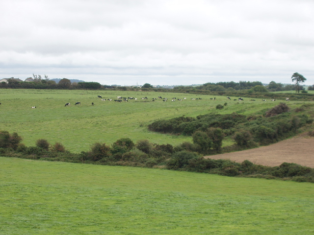 Pasture with cattle near Kilcaragh
