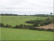 S6307 : Pasture with cattle near Kilcaragh by David Hawgood