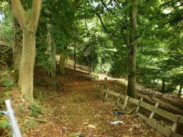 Footpath through Zechariah Wood