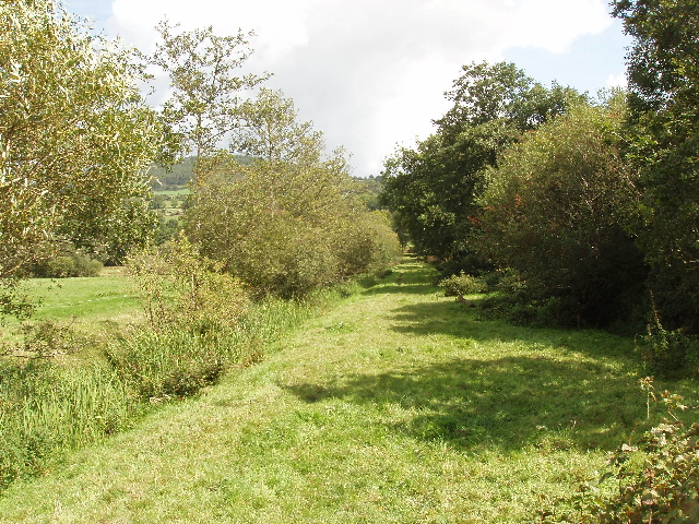 Ditch with reeds near Dowling
