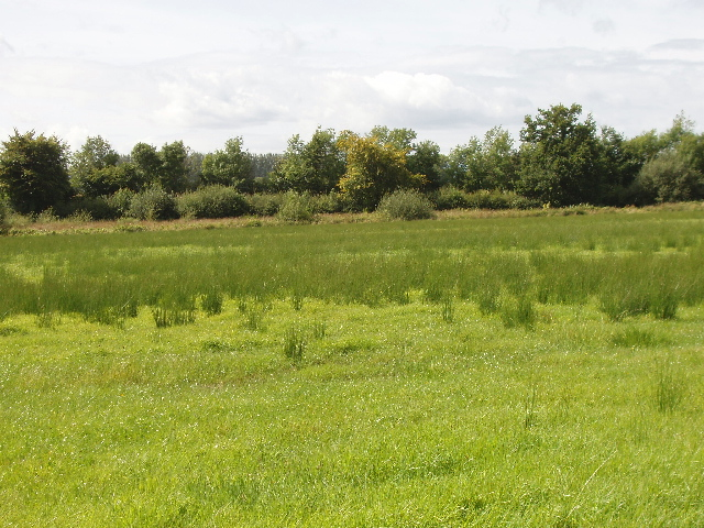 Pasture with reeds near Ballyglassoon