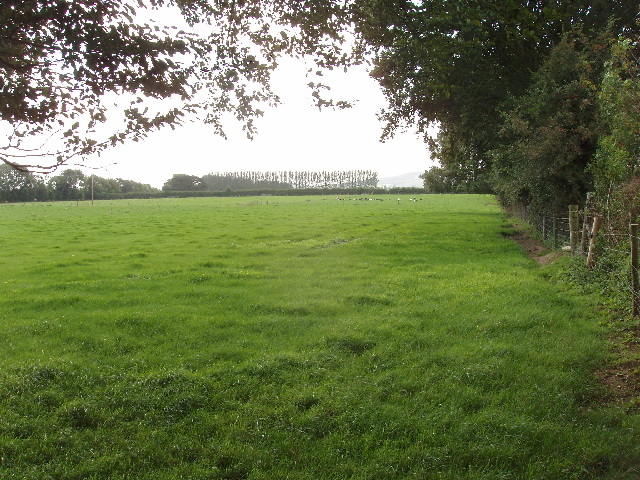 Pasture with trees and cattle near Ballyglassoon