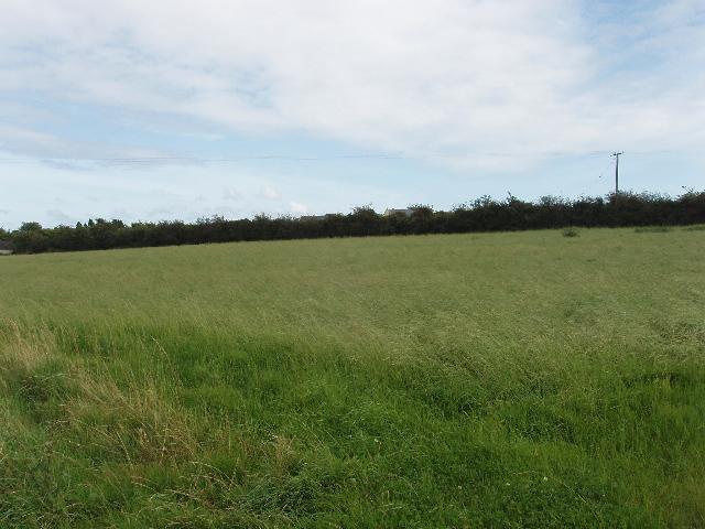 Field of long grass near Carrigeen