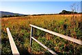NZ4502 : Footbridge over Trenholme Stell by Mick Garratt