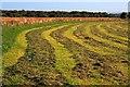 NZ4502 : Hay Field, Near Summerfield Farm by Mick Garratt