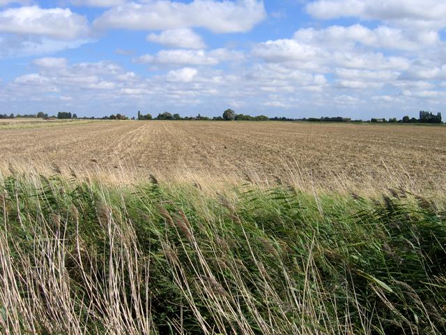 Cultivated stubble field, Moulton Fen, Lincs