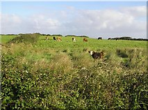 G7457 : Grellagh Townland by Kenneth  Allen