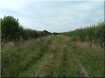 SU4984 : Green lane between hedges south of Chilton by William Jackson