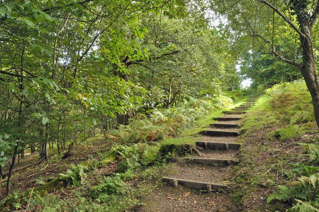 Woodland steps - Gelli Aur Country Park