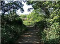 SO8066 : Looking back at the entrance to Shrawley Wood by P L Chadwick