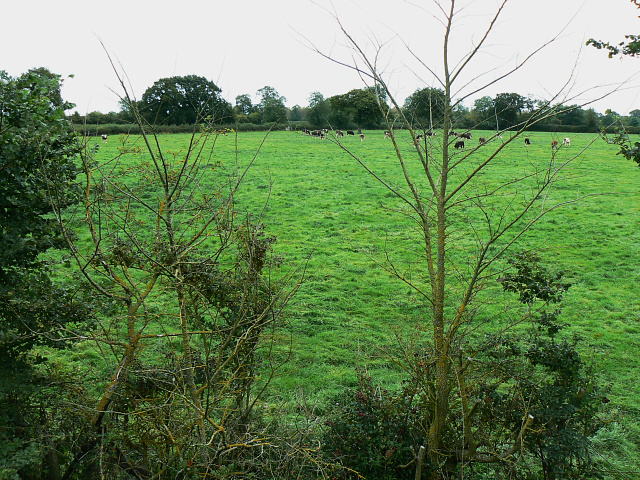 Farmland and cattle near the Swindon and Cricklade Railway, Hayes Knoll