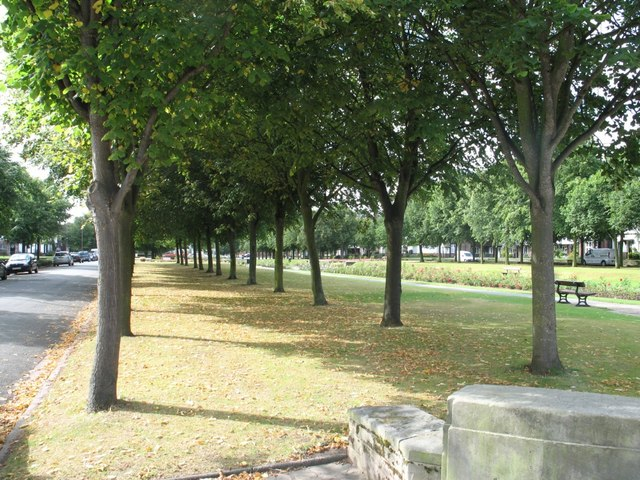 Port Sunlight - A Tree-Lined Avenue