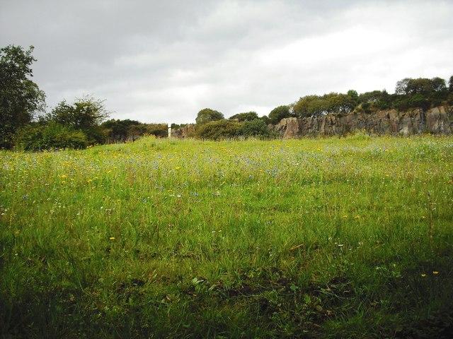 Wild flowers: Auchinstarry quarry