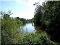 SO8166 : River Severn & Dick Brook by P L Chadwick