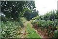 TQ5335 : Green Lane south of Pinstraw Farm by N Chadwick