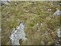 NN3743 : Vegetation, Beinn a' Chreachain by Richard Webb