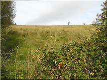 G9035 : Meenymore Townland by Kenneth  Allen