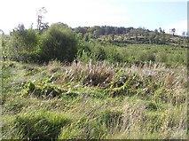 G8641 : Lisnabrack Townland by Kenneth  Allen