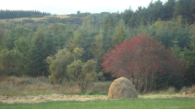 Haystack and Rowan