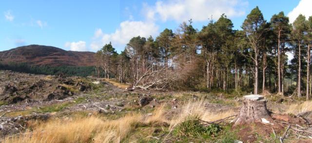 Potterland Pines (Screel on left)