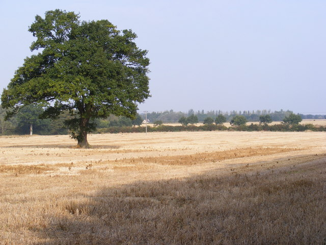 Arable Field next to Plantation Park Sports Centre