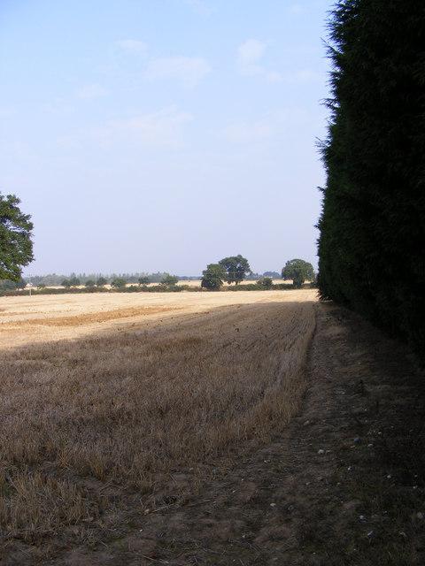 Arable Field next to Plantation Park Sports Centre