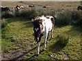 SX6372 : Foal near Swincombe by Derek Harper