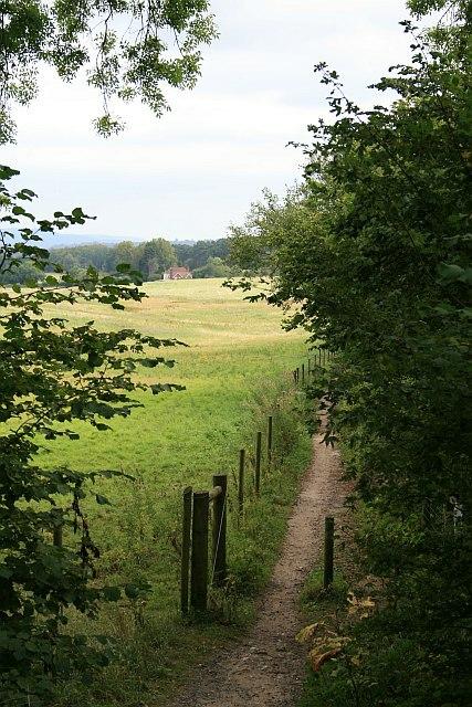 Bridleway at Deerleap Wood