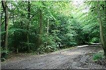 TQ1049 : Drove Road and bridleway by Hugh Craddock
