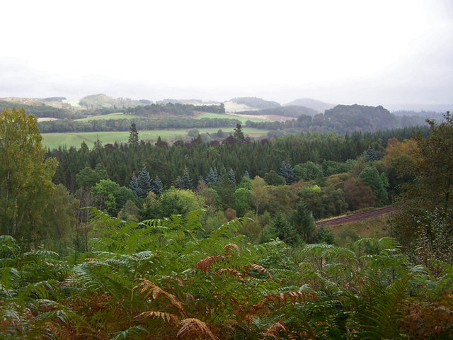 From Birnam Wood to Ring Wood