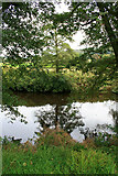 SK2566 : A Tree Reflected in the Derwent by David Lally