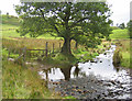 SD6088 : Ford, Burns Beck by Ian Taylor