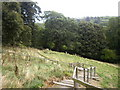 NZ1416 : Steps down to the River Tees by Stanley Howe