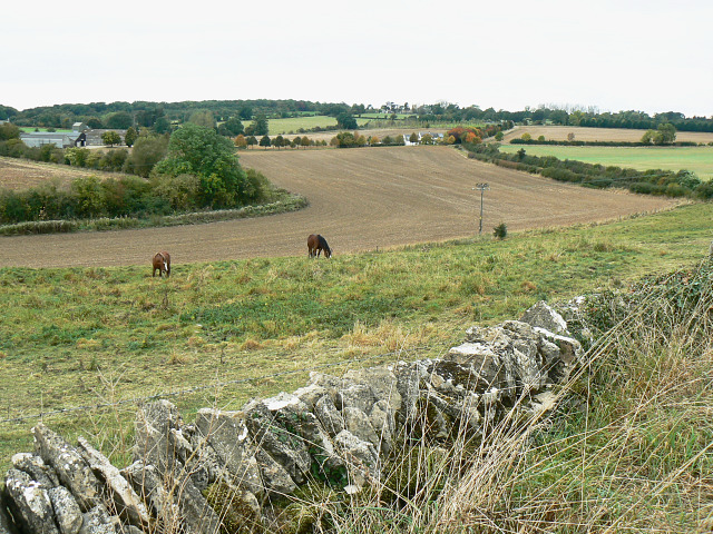 Field boundary, east of Bridewell Farm, East End, Witney