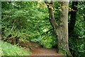 J3369 : Belvoir forest, Belfast (1) by Albert Bridge